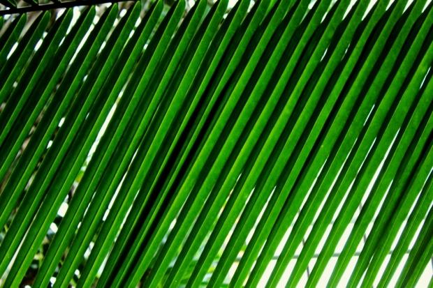 palmiarnia, poznań, oceanofstupidity, krzysztof kaszkowiak, canon eos 550d